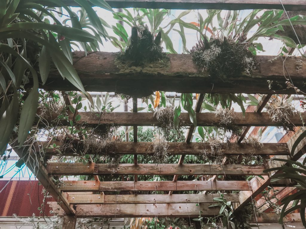 root systems overtaking wood in the greenhouse at atlanta botanical garden