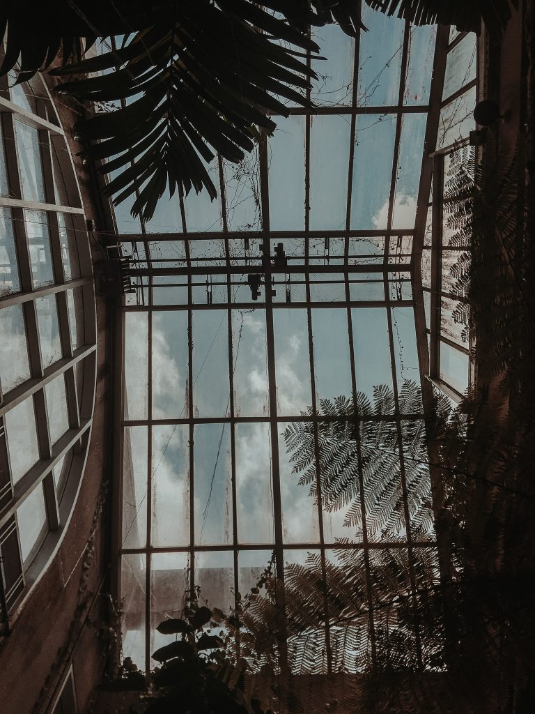 skylights of the greenhouse