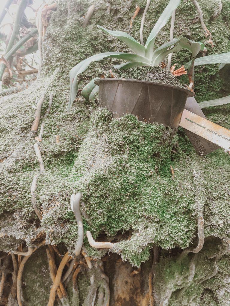 moss consuming a plant pot at the atlanta botanical garden greenhouse